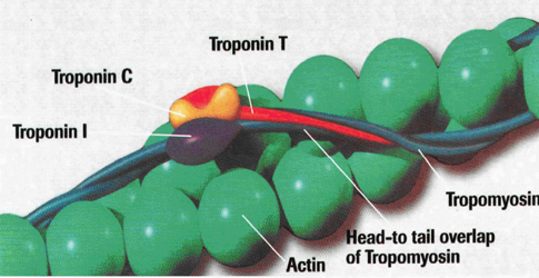 2 negative troponins and dating 6